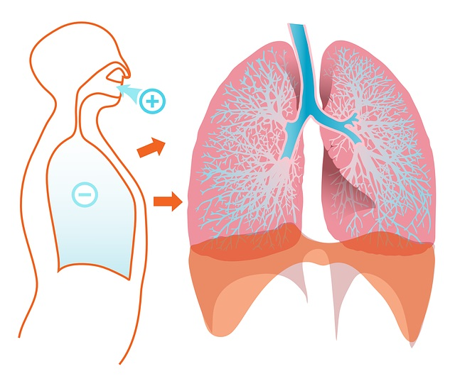 How To Keep The Triggers Of Asthma At Bay