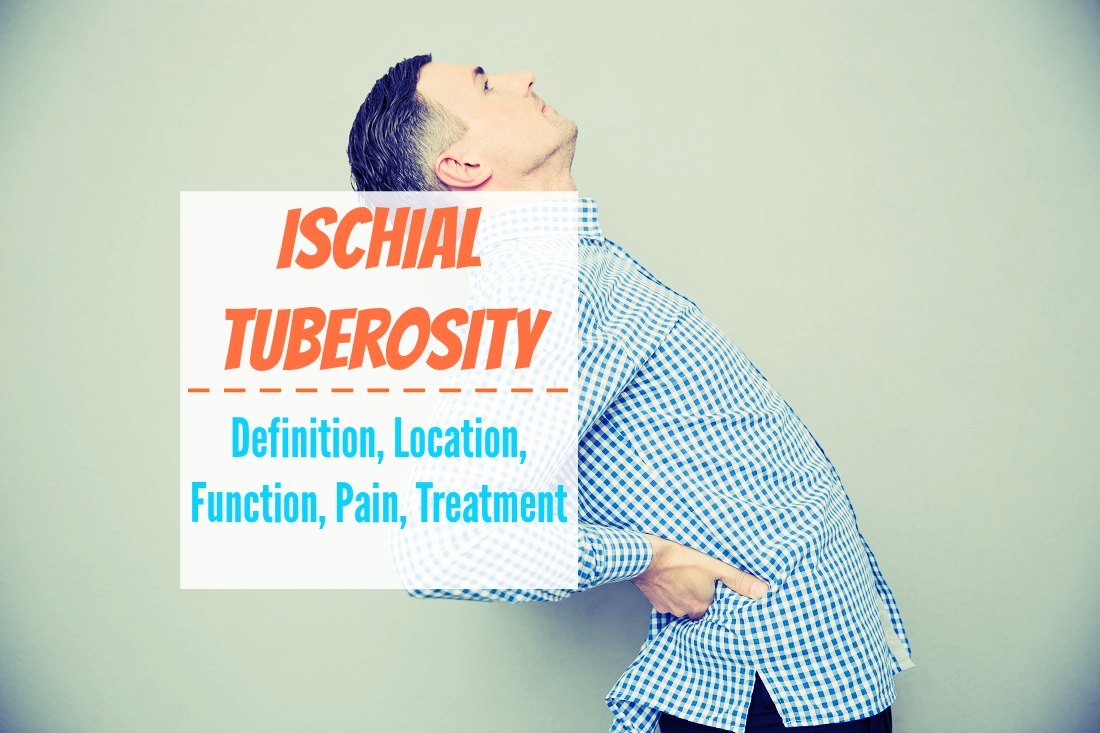 Ischial Tuberosity - Definition, Location, Function, Pain, Treatment ...
